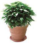 catambra-pianta.jpg