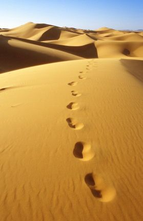 orme_nel_deserto.jpg