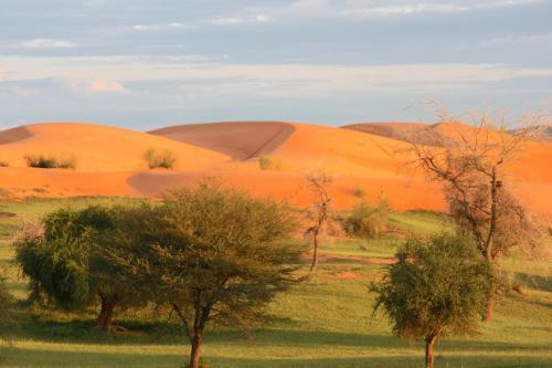oursì,dune,deserto,sahel,burkina,sabbia,paesaggio